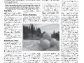 16_a3_tipograf-var3-page-006