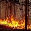 Лесам разрешили гореть ясным пламенем