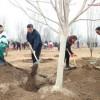 В объективе — Китай   Си Цзиньпин принял участие в посадке деревьев