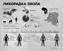 Эбола лихорадит уже полмира