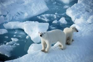 Война за Арктику неизбежна?