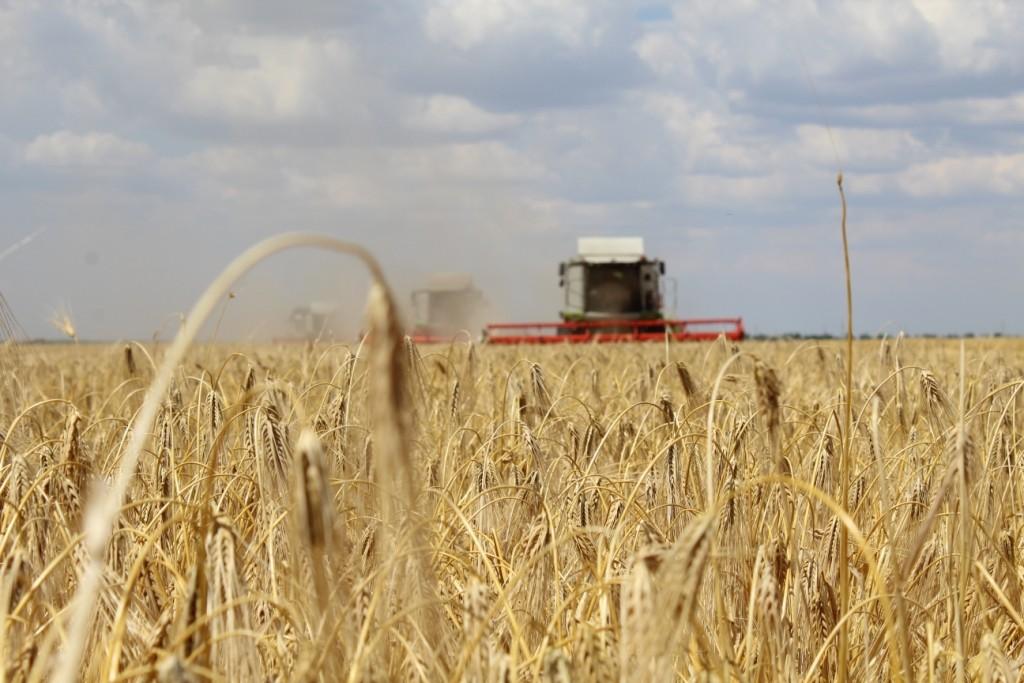 Богатый урожай ведет к разорению хозяйств?