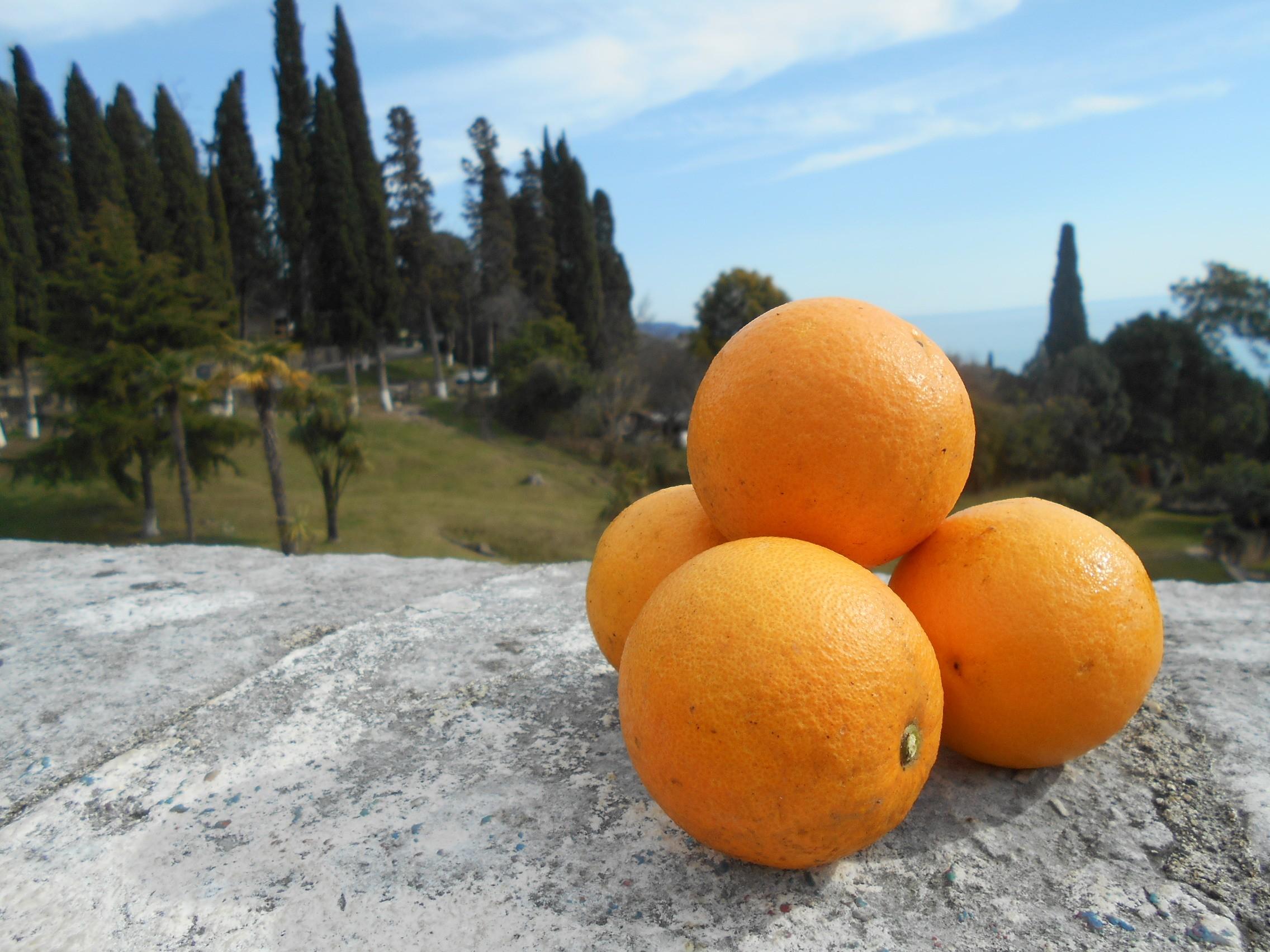Оказией в Абхазию
