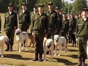 Собачья жизнь: счастливая и не очень